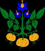 Heraldic potato by Lokal Profil