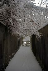 Winter Walk by Berit Watkin, Surrey, UK, 2007.